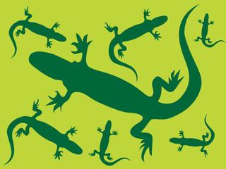 Lizard's background