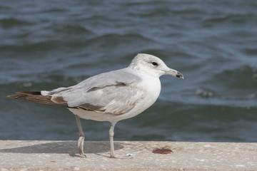 SEA BIRD LOOKING AT THE HORIZON