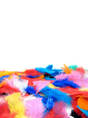 Birds feathers