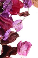 automne couleur pastel