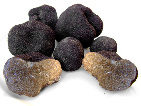 truffes 1
