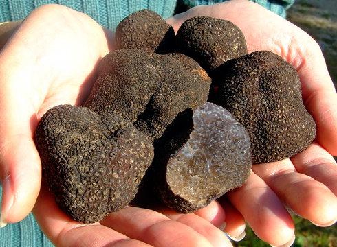 truffes 2