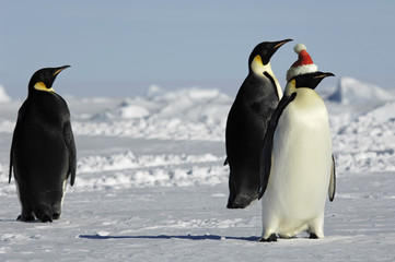 Penguin group at Christmas