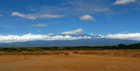 Wall Mural - Kilimanjaro mountain Tanzania snow capped under cloudy blue skies captured whist on safari in Africa Kenya.