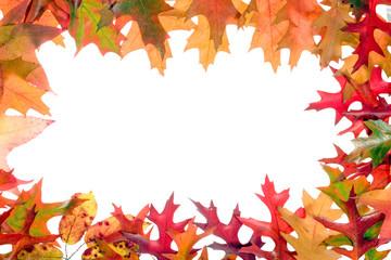 fall leaves frame 3