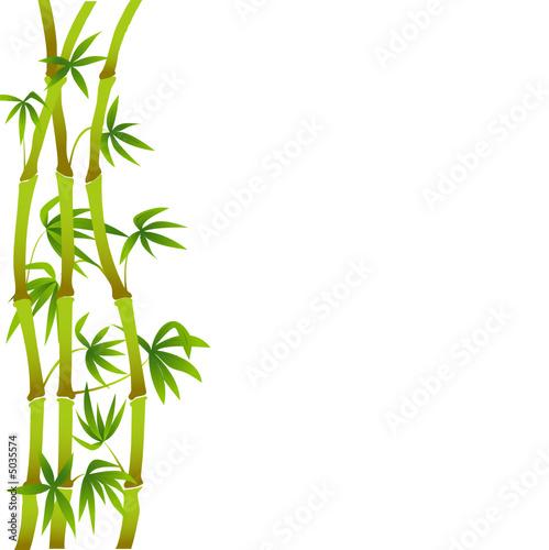 Bambous sur fond blanc fichier vectoriel libre de droits sur la b - Achat bambou en ligne ...