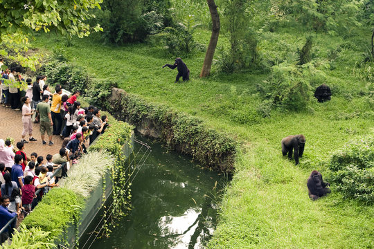 zoo with attendance