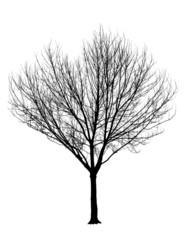 Bare Tree Silhouette Isolation