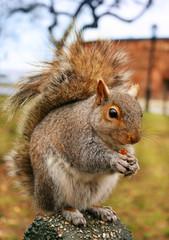 squirrel. version 2