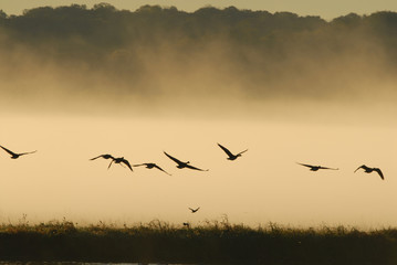 Wildlife flight