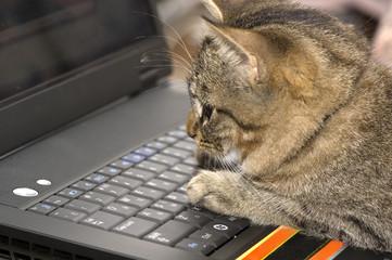 kitten &  laptop
