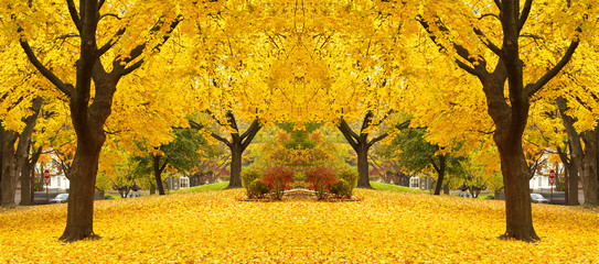Wall Murals Orange yellow maple leaves landscapes