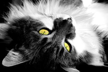 Foto op Canvas Hand getrokken schets van dieren My cat