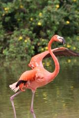 flamingo on the run