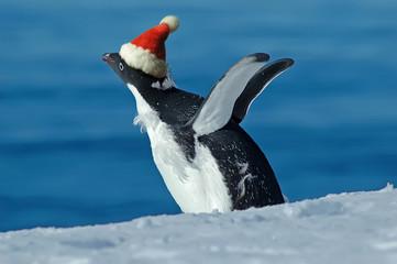 Christmas excitement