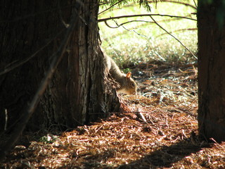 Squirrel and the Tree