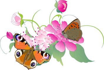 butterflies on flowers illustration