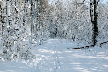 The winter forest, beautiful landscape