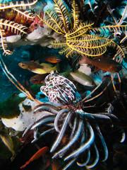 algues et poissons, couleurs du fond