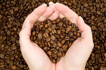 Harvesting Coffee Beans