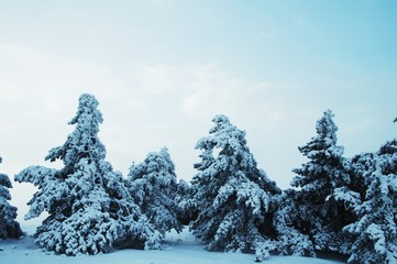 Winter landscapes