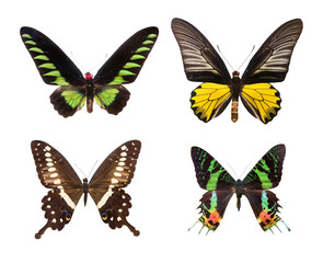 exotic colorful butterflies