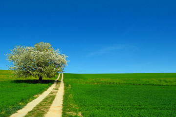 Uphill way in a green country with tree