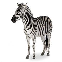 Keuken foto achterwand Zebra Zebra