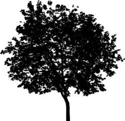 Isolated tree - Mask