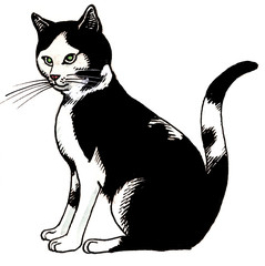 One black and white domestic cat