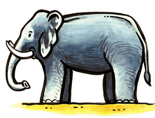 One big grey elephant with tusks