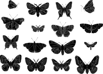 butterfly silhouettes collection