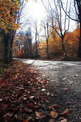 A road in the forest when spring time. Autumn way scene...