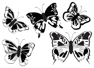 Vector realistic butterflies collection