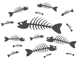 black and white fish skeletons on white background
