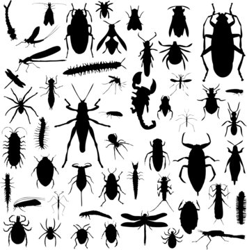 Bug Silhouettes