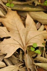 dried leaves and fresh plants in autumn