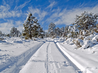 Rural forest road in winter