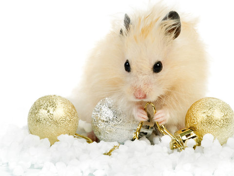 Fluffy hamster with christmas toys on white background