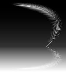 Reflecting feather