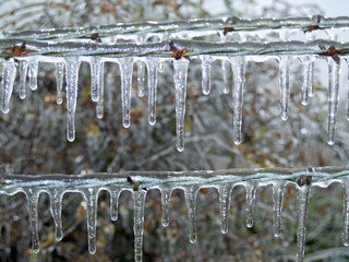 Icicles on barbwire fence