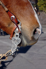 Western Equestrian Bit And Headstall on Horse's Head