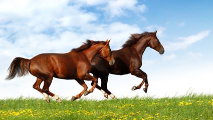 Fotoväggar - horses gallop