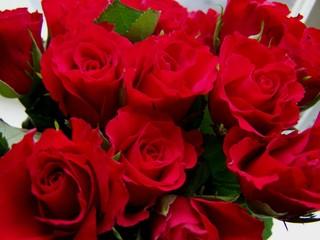 Rosen - Rose