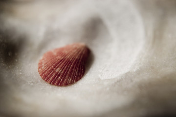 small red sea shell