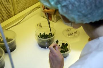 in vitro Pflanzenlabor