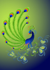 Peacock, vector illustration