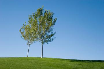 Tree on an open green grass field