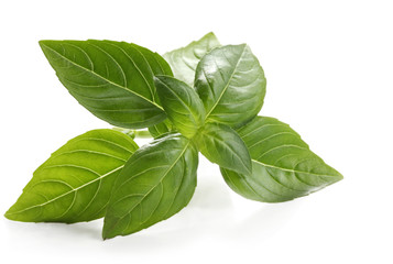 Basil sprig, reflected on white surface.