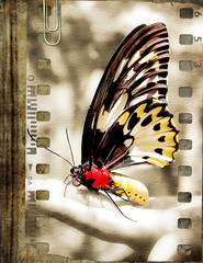 retro film strip with butterfly